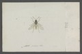 Kend - Print - Iconographia Zoologica - Special Collections University of Amsterdam - UBAINV0274 038 14 0010.tif