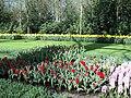 Keukenhof 2012 - panoramio (146).jpg