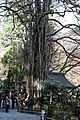 Kibune (6912626894).jpg
