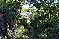 Kirstenbosch National Botanical Gardens - panoramio - Frans-Banja Mulder (2).jpg