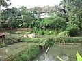 Kolam ikan - panoramio (1).jpg