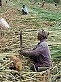 Koro-complexe-sucrier-plantations-21.jpg