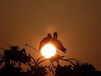 Kulik-Bird-4.jpg