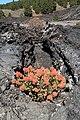 La Palma - El Paso - Calle Tamanca - Lava from Llano del Banco 13 ies.jpg