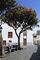 La Palma - Santa Cruz - Plaza de San Francisco + Delonix regia 02 ies.jpg