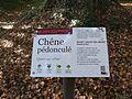 Labellisation du chêne de Saint-Jacut-du-Mené.jpg