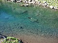 Lago Brutto with swimming dog.jpg