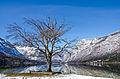 Lake Bohinj on a crystal clear winter morning.jpg