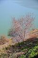 Lake Ram090a.jpg