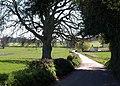 Lane to Powderham - geograph.org.uk - 1223136.jpg
