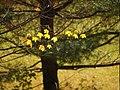 Last Leaves (2988157592).jpg