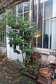 Laurier, Villa Vassilieff, Montparnasse, Paris 23 November 2016 002.jpg