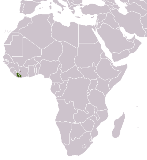 West African oyan species of mammal