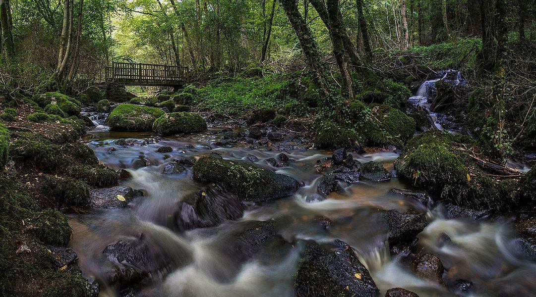Pont de bois dans le fond des Gorges