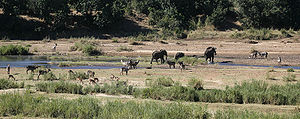Letaba River - View of the Letaba River