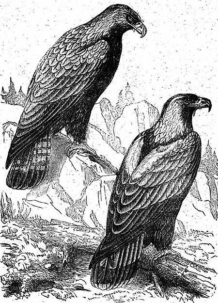 Lezioni e racconti per i bambini gli uccelli wikisource - Uccelli che sbattono contro le finestre ...
