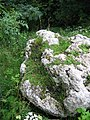Limestone Boulder - geograph.org.uk - 9516.jpg