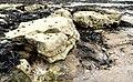 Limpet-clad Rocks at South Landing - geograph.org.uk - 424809.jpg