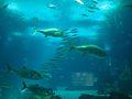 Lisbon Oceanarium (14423647303).jpg