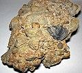 Lithic breccia (Quaternary; Flint Ridge, Ohio, USA) 4.jpg