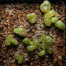 succulent propagation timeline
