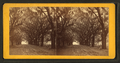 Live Oak Avenue, Bonaventure, from Robert N. Dennis collection of stereoscopic views 10.png