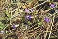 Local flora (MakGi) (34822684412).jpg