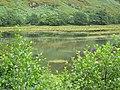 Loch Shiel - geograph.org.uk - 1417729.jpg