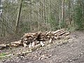 Logging in the woods - geograph.org.uk - 761443.jpg