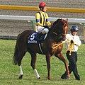 Lohengrin(horse) 20061029R1.jpg
