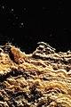 Los Ojos del Salar de Uyuni 06.jpg