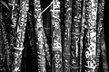 Love and the Bamboos (40000103101).jpg