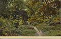 Lovers Lane, Belleville, Neb. (12659875754).jpg