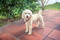 Luly (8827883038).jpg