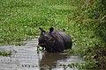 Lunch time folks - Flickr - Dr. Santulan Mahanta.jpg