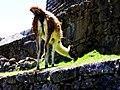 Machu Picchu (Peru) (14907137709).jpg