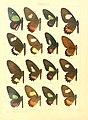 Macrolepidoptera15seit 0015.jpg