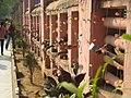 Mahabodhi Temple - IMG 6504.jpg