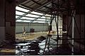 Main Auditorium Foyer Under Construction - Convention Centre Complex - Science City - Calcutta 1996-02-21 998.JPG