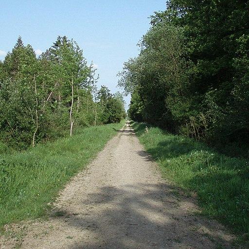 Main bridleway through Bucknell Wood - geograph.org.uk - 443588