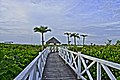 Main walkway to the beach. - panoramio.jpg