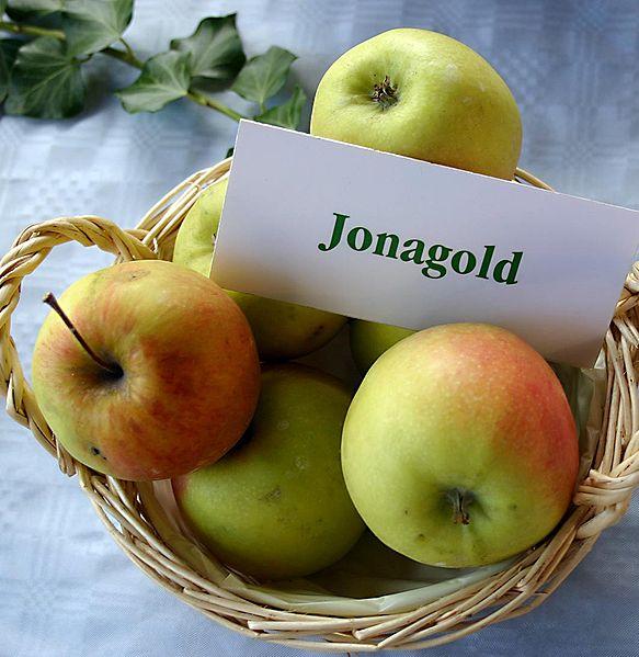 http://upload.wikimedia.org/wikipedia/commons/thumb/3/3d/Malus-Jonagold.jpg/583px-Malus-Jonagold.jpg
