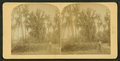 Man with rifle standing near a road, from Robert N. Dennis collection of stereoscopic views.png