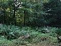 Managed woodland in Barkestone Wood - geograph.org.uk - 64010.jpg