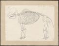 Mastodon spec. - skelet - 1700-1880 - Print - Iconographia Zoologica - Special Collections University of Amsterdam - UBA01 IZ22000143.tif