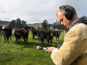 Field recording - M. C. Schmidt of Matmos recording cow audio samples for their 2006 album