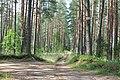 Mežā, Ropažu pagasts, Ropažu novads, Latvia - panoramio.jpg