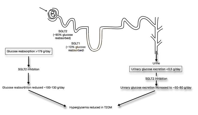 SGLT2 inhibitor - Wikipedia