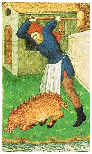 Stunning - Medieval pig stunning using a pollaxe