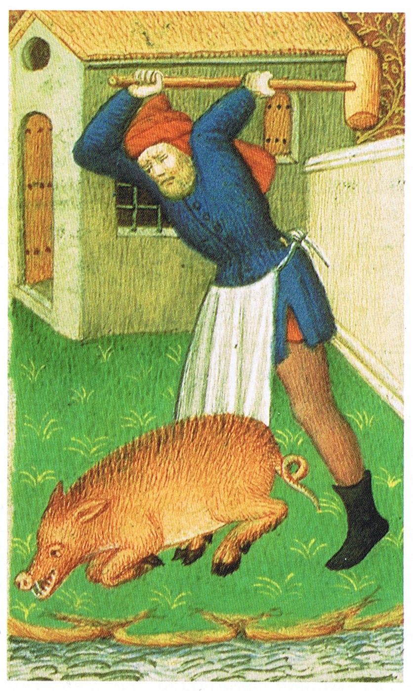 Medieval pig slaughter
